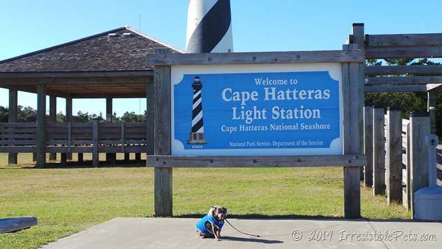 Cape Hatteras Lighthouse with Chuy Chihuahua