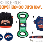 Irresistible Pet Finds for Super Bowl 2014