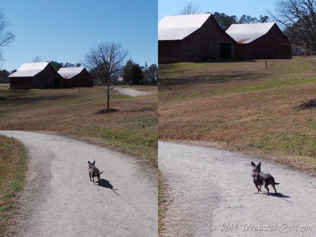 Chuy Chihuahua Farm House