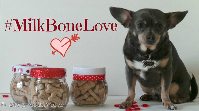 DIY Valentines Day Dog Treat Jar #MilkBoneLove