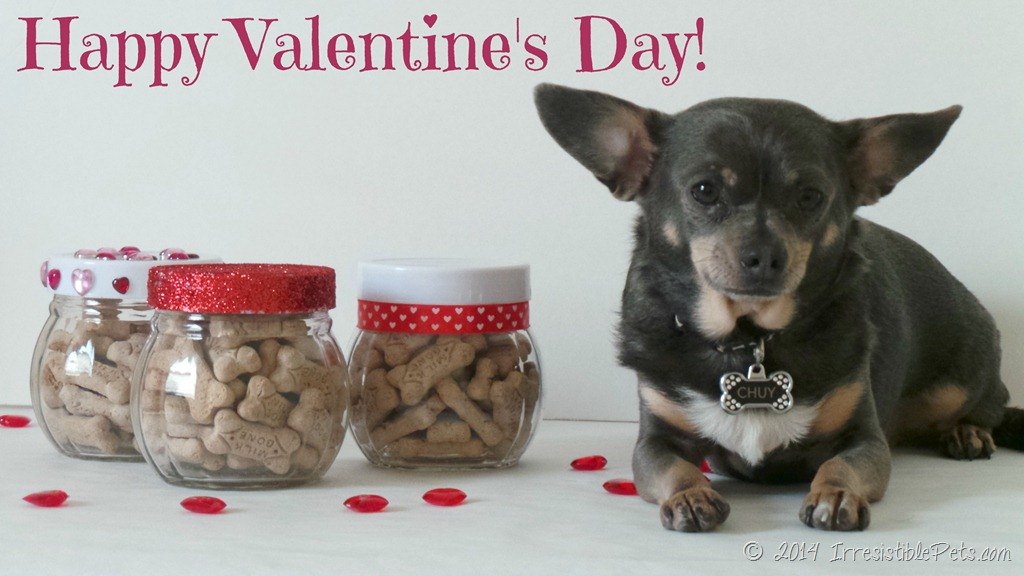 Diy Valentine S Day Treat Jar Milkbonelove Irresistible Pets