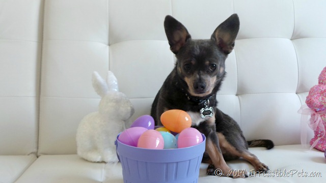 DIY Easter Basket for Dogs - IrresistiblePets.com