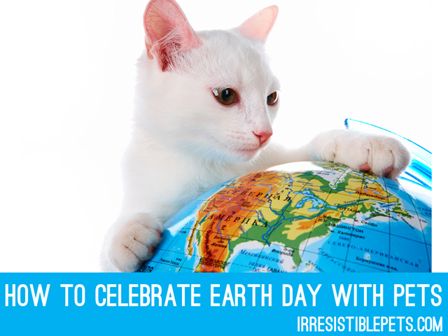 Celebrate Earth Day with your Pets at IrresistiblePets.com