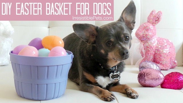 DIY Easter Basket for Dogs by IrresistiblePets.com