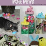 DIY Easter Ideas for Pets
