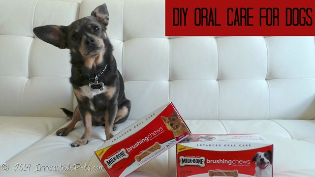 DIY Oral Care for Dogs - IrresistiblePets.com