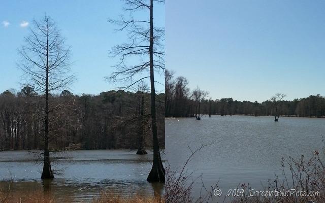 Stumpy Lake IrresistiblePets.com