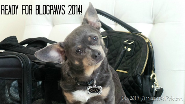 Packing for BlogPaws 2014 in Lake Las Vegas!