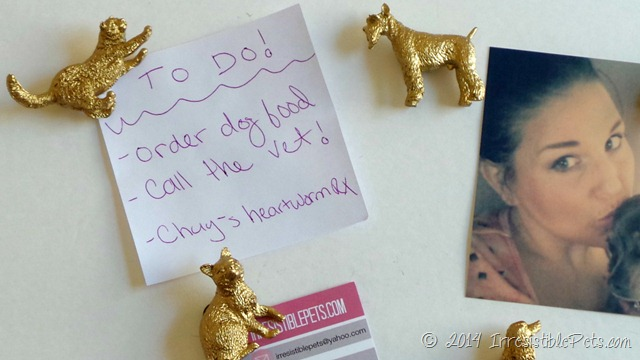 DIY Gold Dog and Cat Magnets - IrresistiblePets.com
