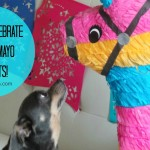 How To Celebrate Cinco de Mayo with Pets