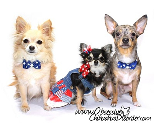 Memorial Day Obsessive Chihuahua Disorder