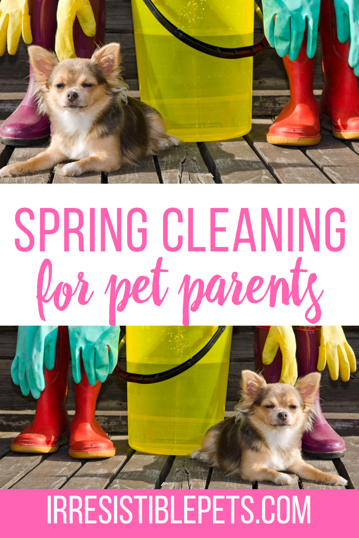 Spring Cleaning Tips for Pet Parents