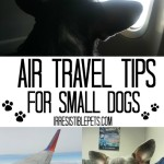 Ten Air Travel Tips for Small Dogs