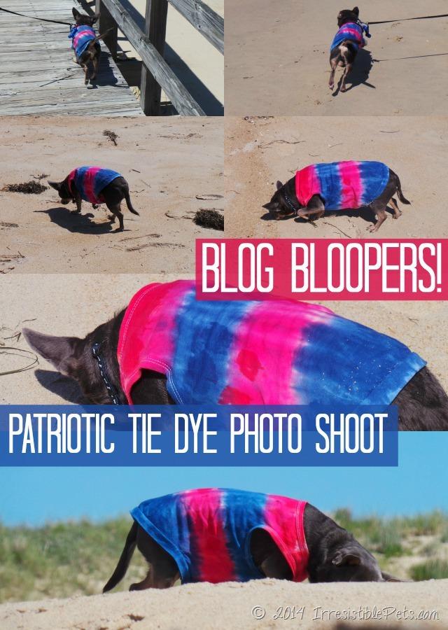 Blog Bloopers - Patriotic Tie Dye Photo Shoot at IrresistiblePets.com