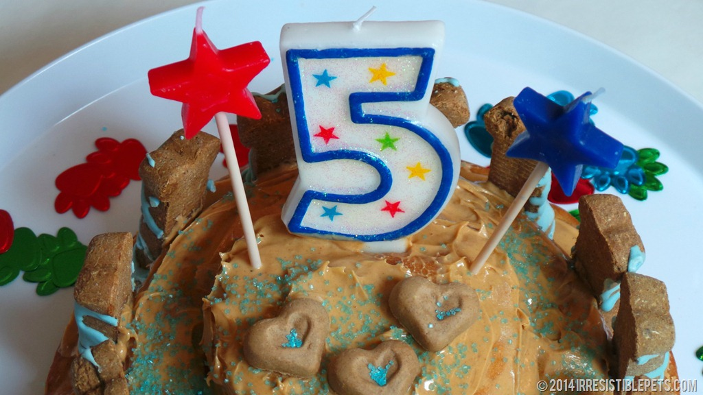 Dog Birthday Cake Recipe For Chuys 5th Birthday Irresistible Pets