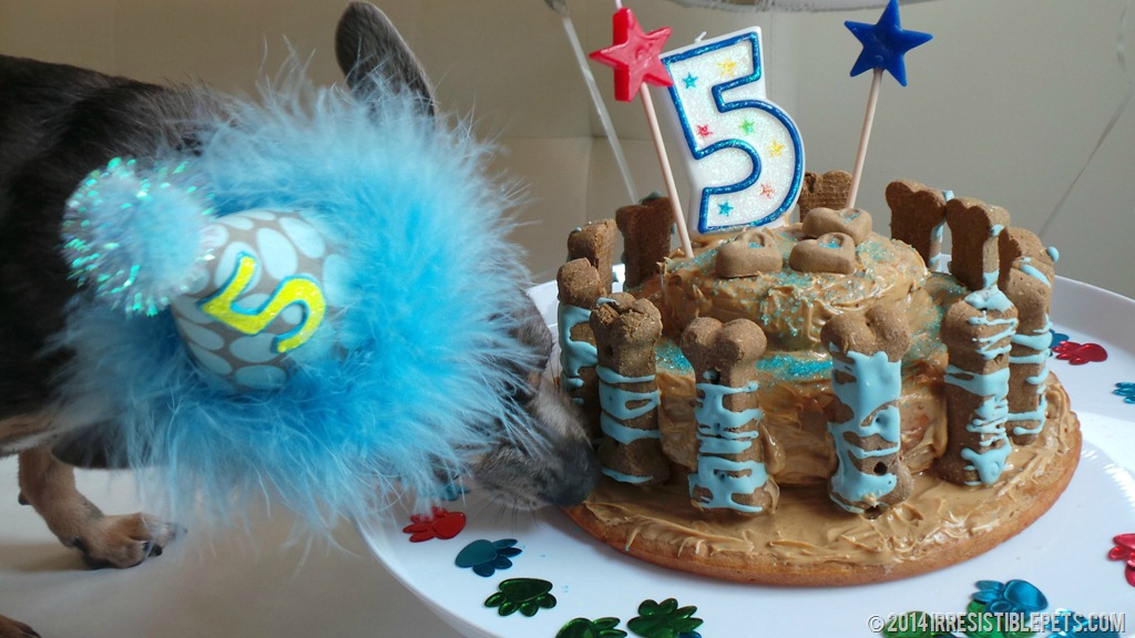 Dog Birthday Cake Recipe With Chuy Chihuahua