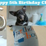 Happy 5th Birthday, Chuy!
