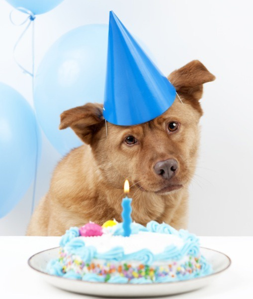 Gif Dogs Eating Birthday Cake