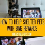 How to Help Shelter Pets with Bing Rewards