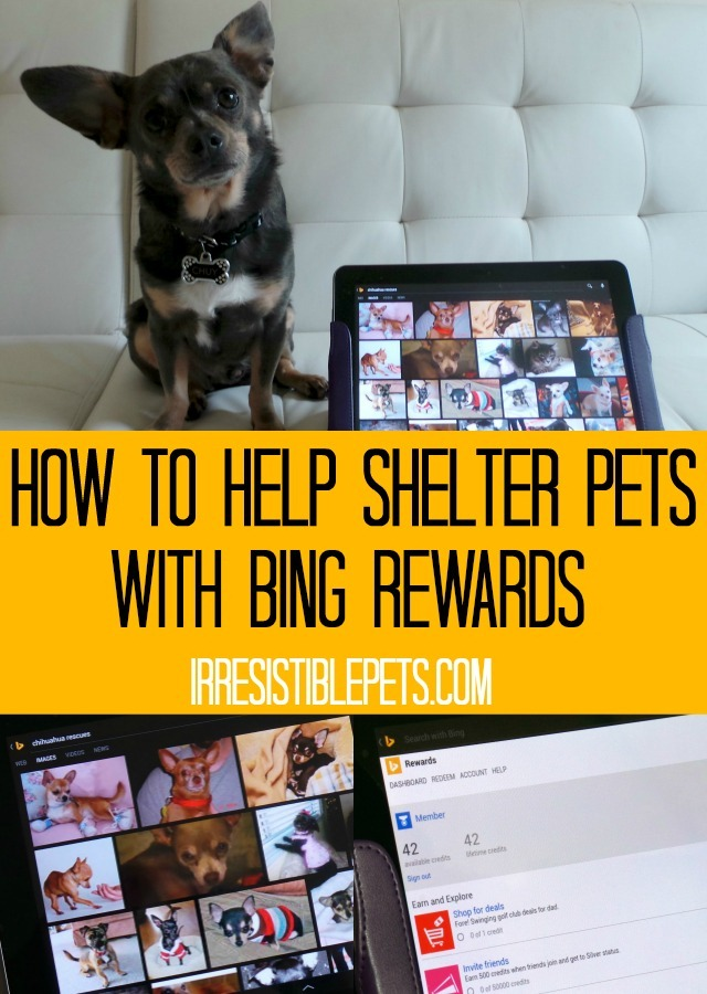 How to Help Shelter Pets with Bing Rewards by IrresistiblePets.com