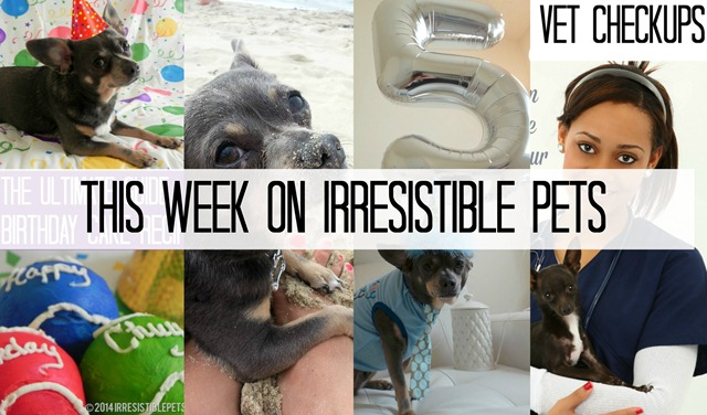 This Week on Irresistible Pets