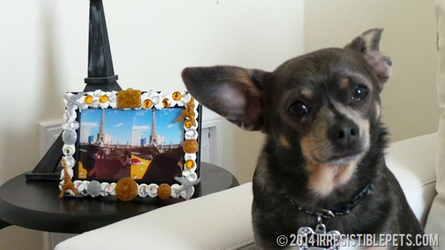 DIY 3D Decoden Vacation Photo Frame Chuy Chihuahua