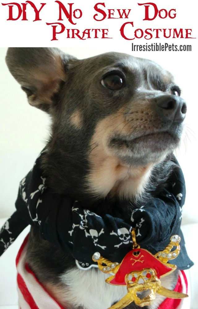 DIY Pirate Dog Costume
