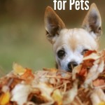 Fall Bucket List for Pets and Pet Parents