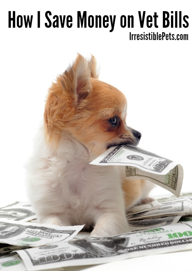 How I Save Money on Vet Bills by IrresistiblePets.com