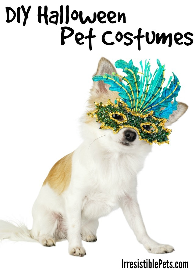 DIY Halloween Pet Costumes
