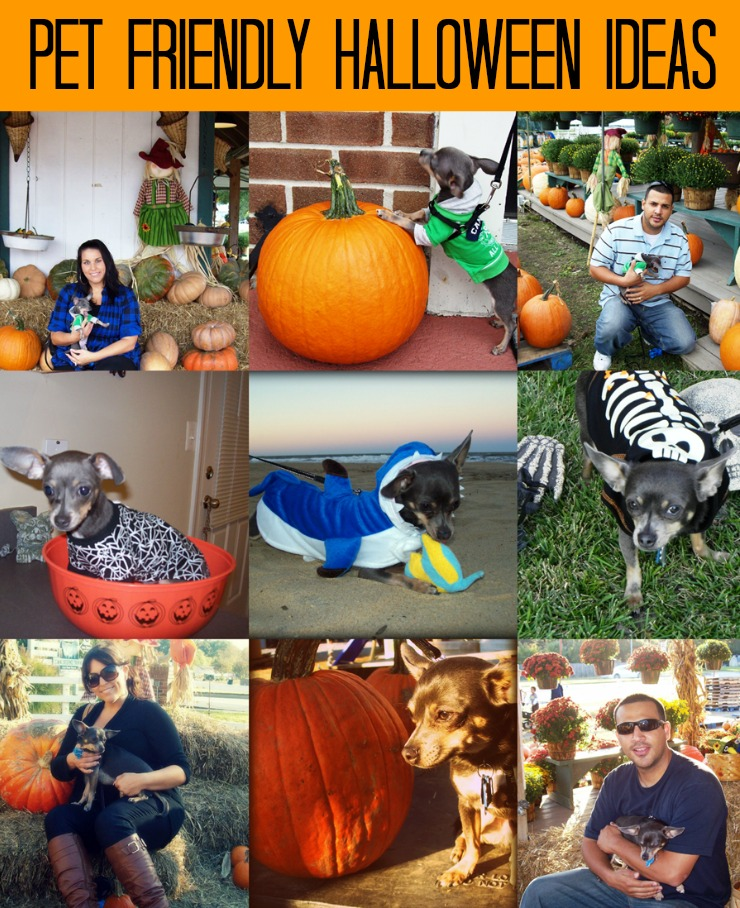 Pet Friendly Halloween Ideas from IrresistiblePets.com