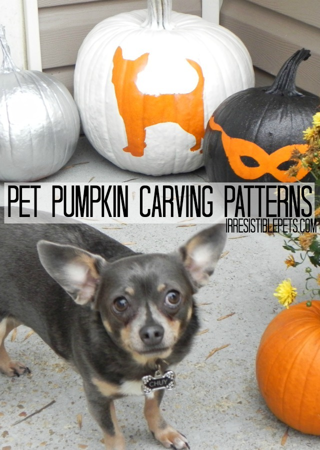Pet Pumpkin Carving Patterns and Ideas from IrresistiblePets.com