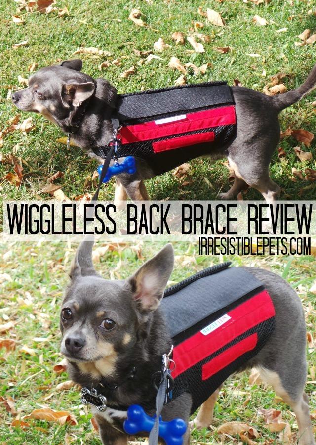 WiggleLess Back Brace Review by IrresistiblePets.com