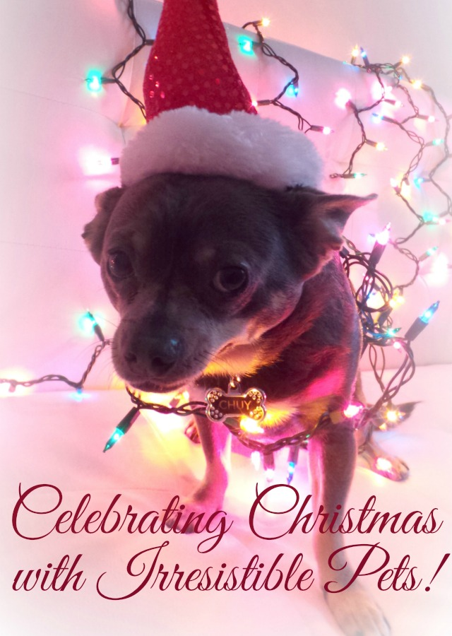 Celebrating Christmas with Irresistible Pets - DIY and Recipes for Pets and Pet Parents!
