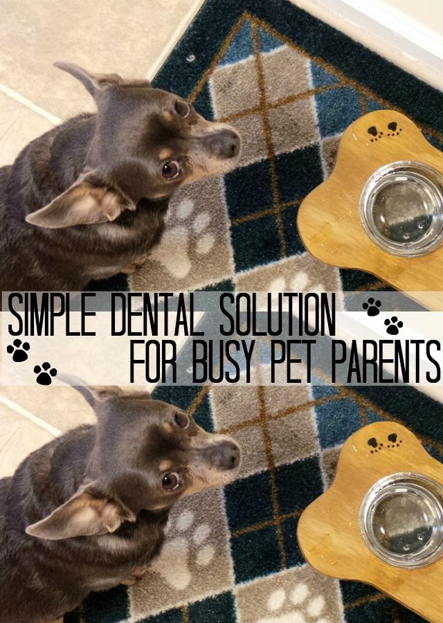 Simple Dental Solution for Busy Pet Parents  #SmoochUrPooch