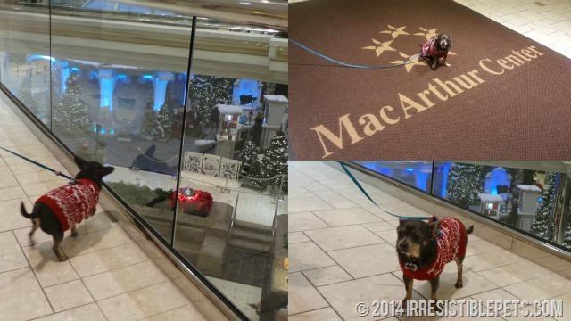 Chuy at MacArthur Center