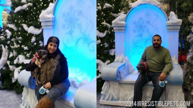 Ice Throne