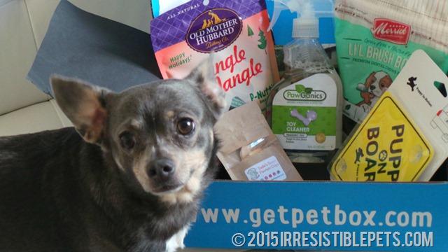 Chuy Chihuahua PetBox December