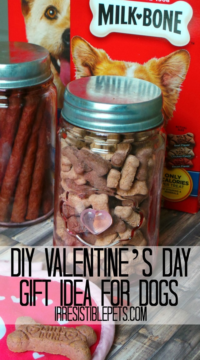 DIY Valentine's Day Gift Idea for Dogs  by IrresistiblePets.com