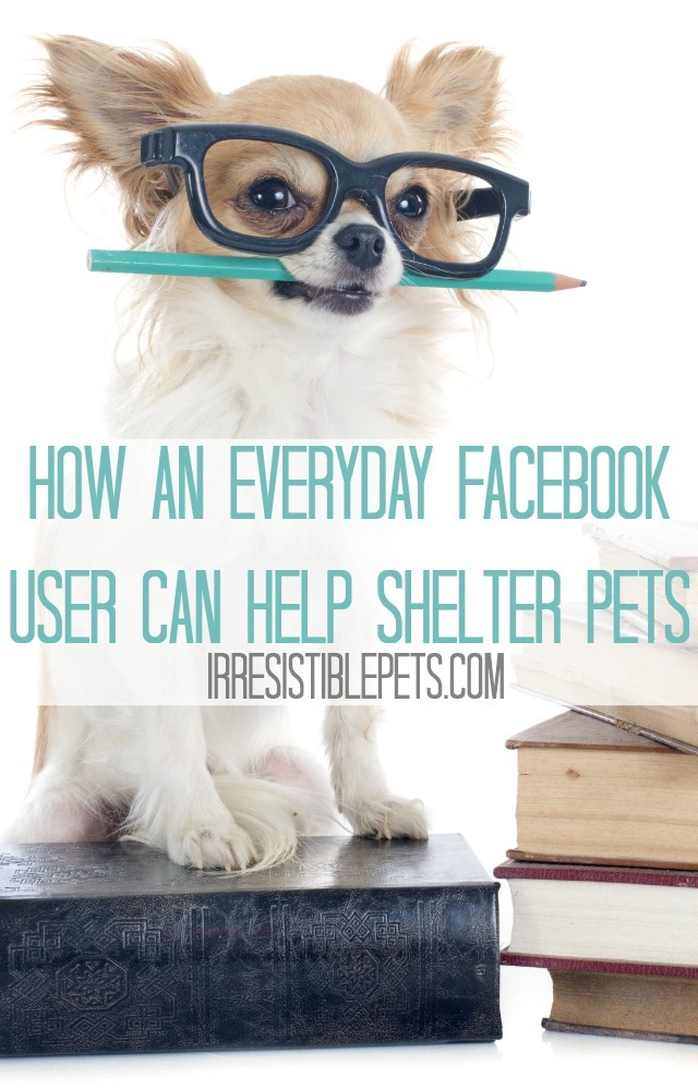 How an Everyday Facebook User Can Help Shelter Pets Read on IrresistiblePets.com