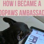 How I Became a BlogPaws Ambassador