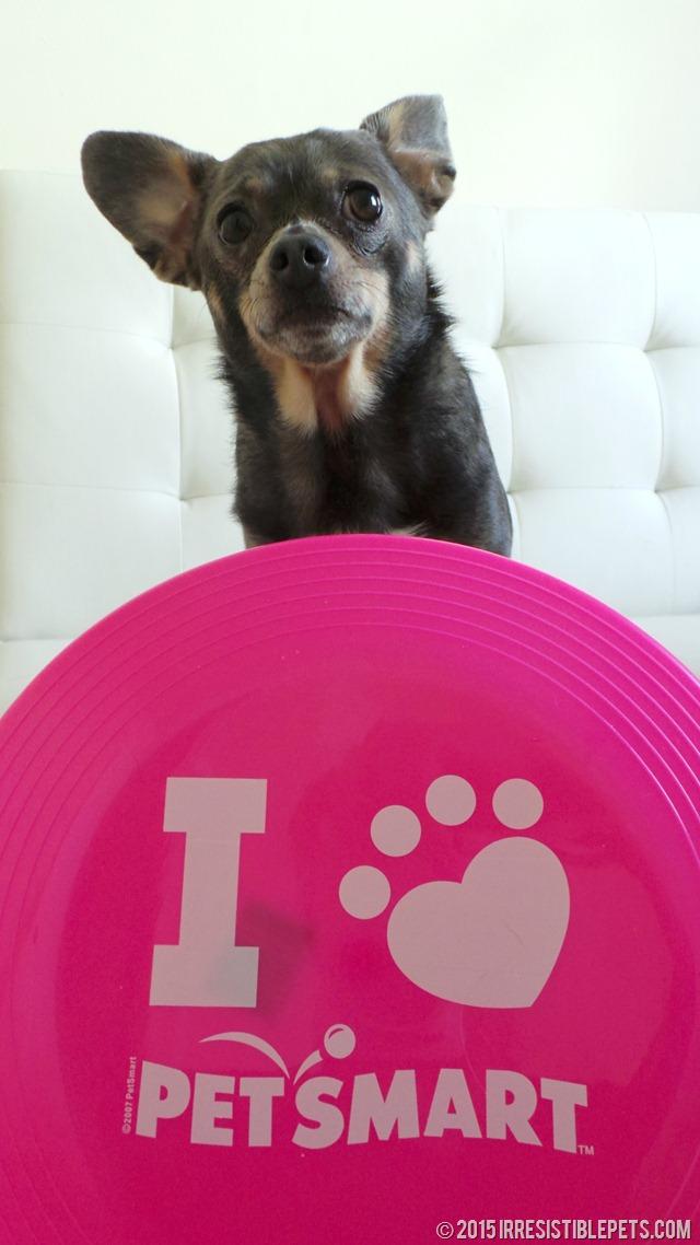 I Love PetSmart Chuy Chihuahua