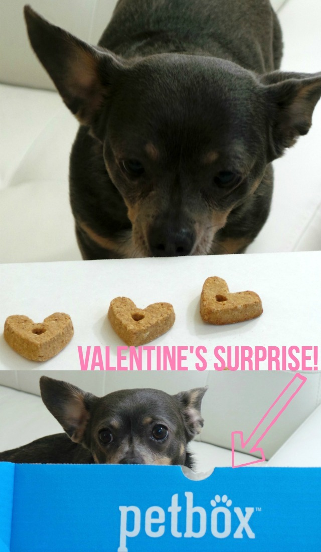 Valentine's Day Surprise from Petbox and IrresistiblePets.com