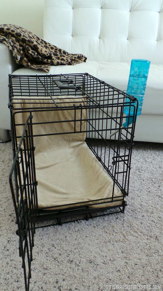 Crate Training Must Haves
