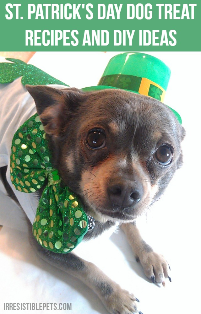 St. Patrick's Day Dog Treat Recipes and DIY Ideas by IrresistiblePets.com