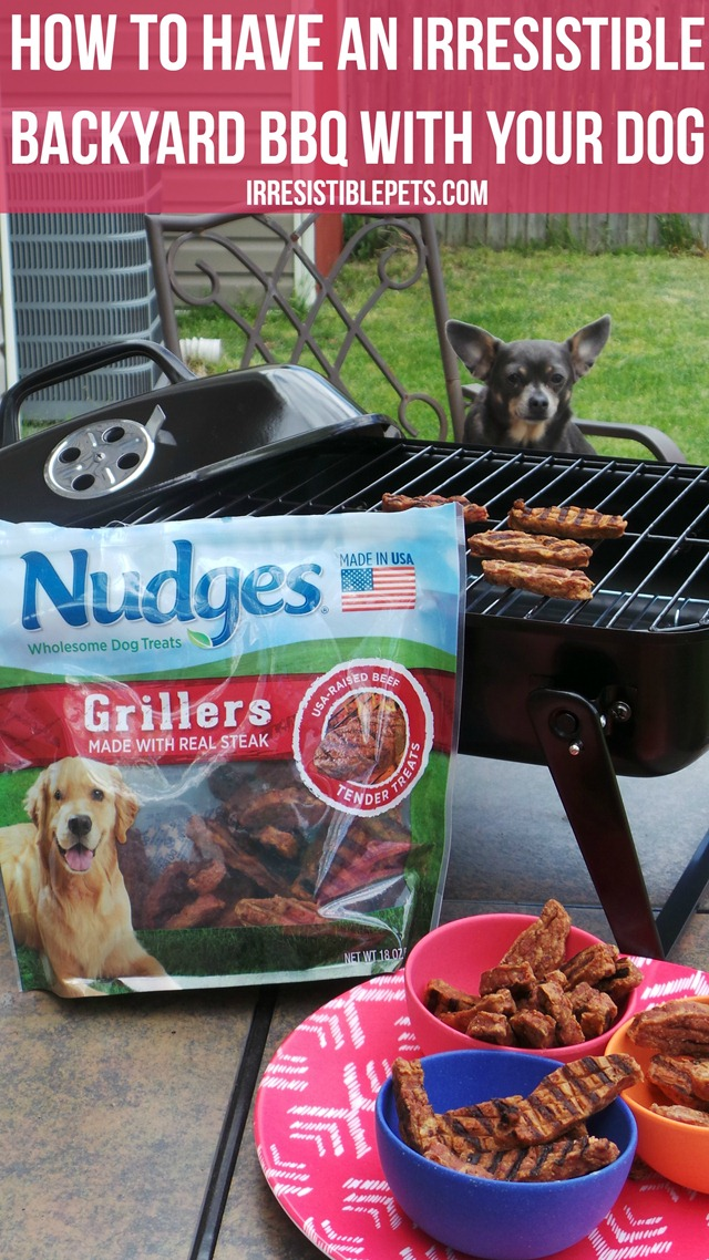 How To Have An Irresistible Backyard BBQ With Your Dog by IrresistiblePets.com
