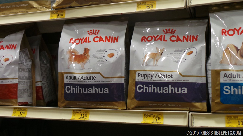 Five Nutrition Tips For Chihuahuas Royalcanin
