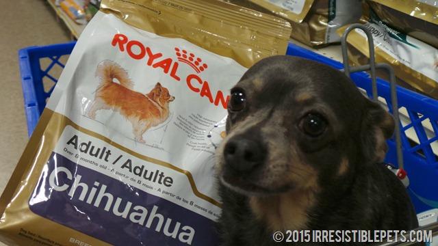 Royal Canin Chihuahua