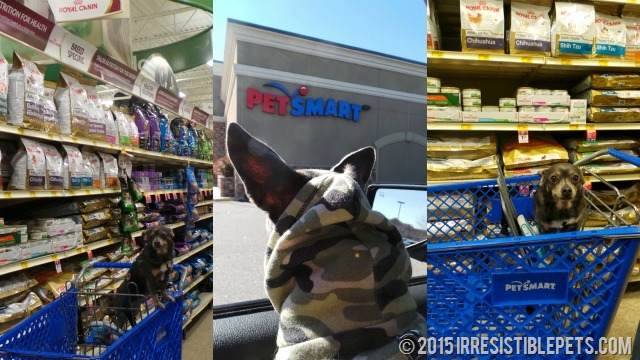 Royal-Canin-PetSmart-with-Chuy-Chihuahua.jpg