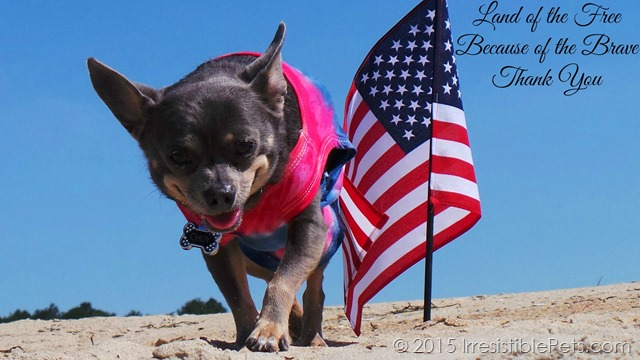 Memorial Day Thank You from IrresistiblePets.com